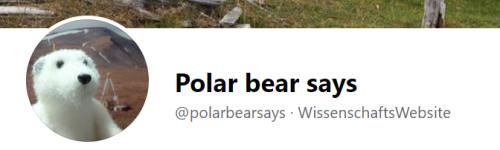 Polarbearsays